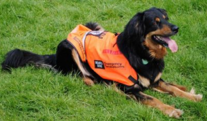 911-restoration-water-damage-repair-mold-fire-dog