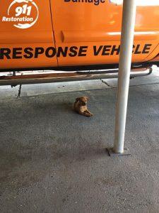 911 Restoration Pupper At Headquarters